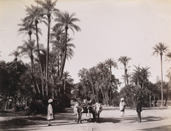 Lahore - date palms near the church.
